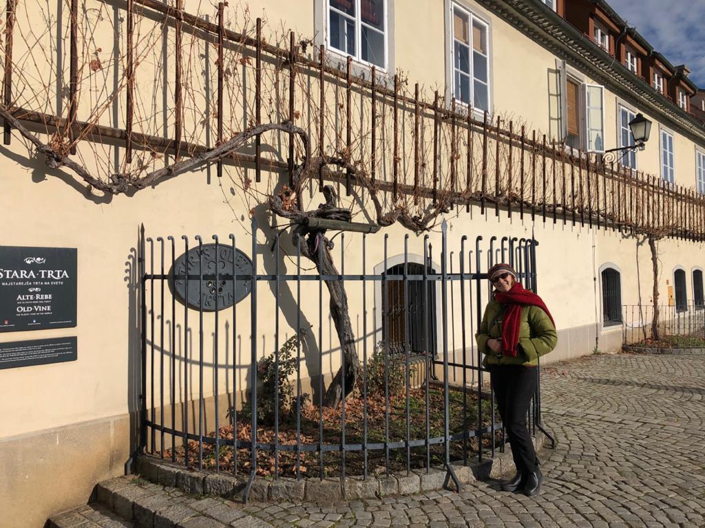 La casa della vecchia vite a Maribor in Slovenia