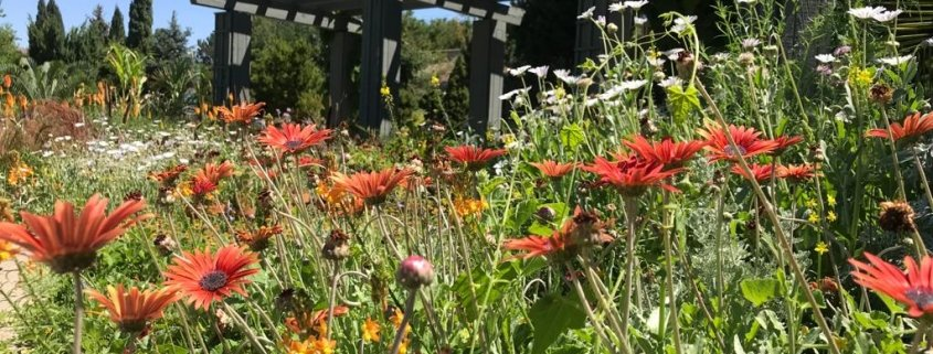 giardino botanico di Denver in Colorado stati uniti